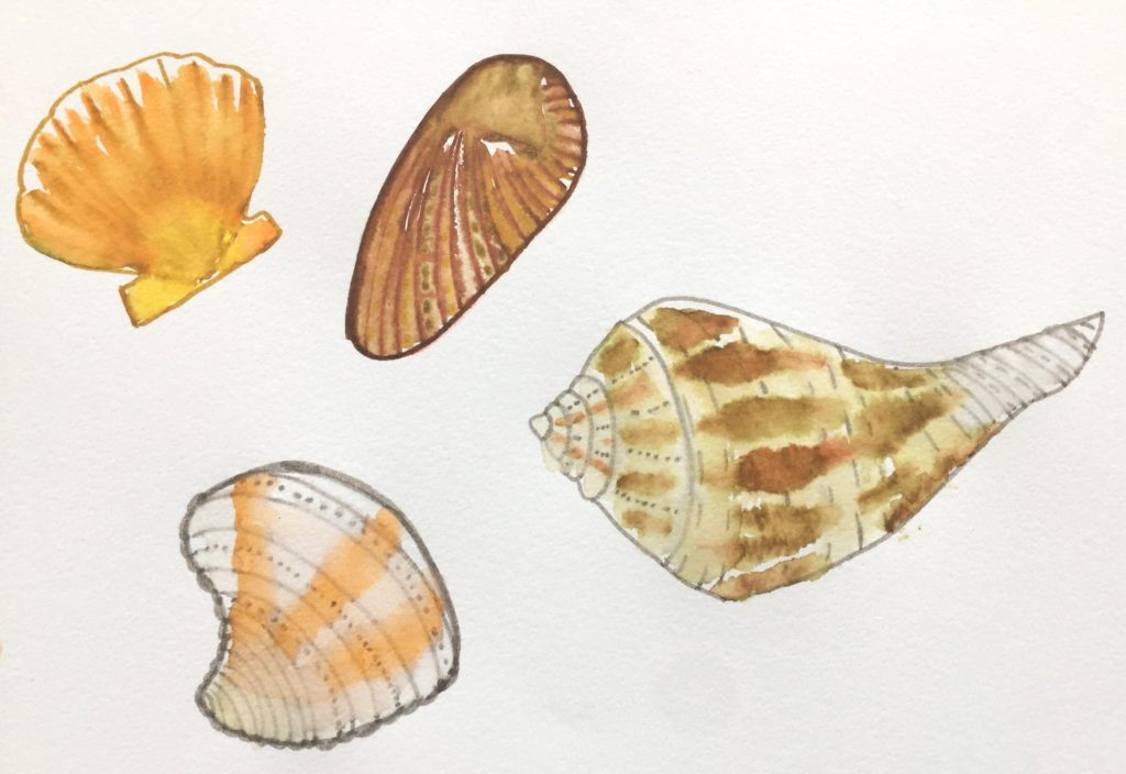 Pen & water doodles of shells found on the beach at Playa del Carmen | A Life More Beautiful