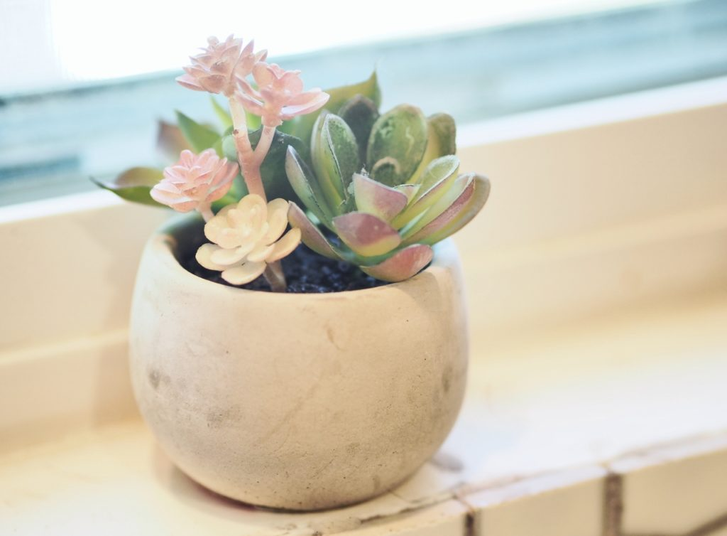 Succulents and cactus are the interior plant of choice   ALMB